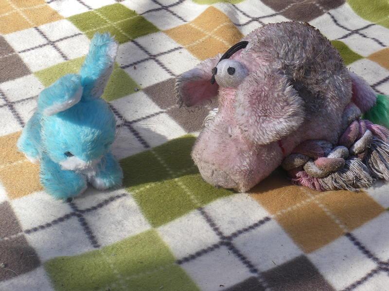 Osterhase Schwein
